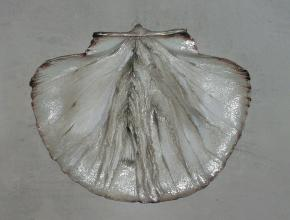 Yaroslav Zyablov. Shell